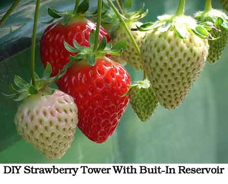 how to build a hydroponic garden tower